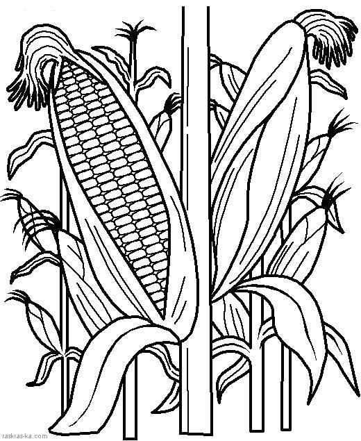 Раскраска  кукуруза. Овощи. Скачать кукуруза.  Распечатать овощи