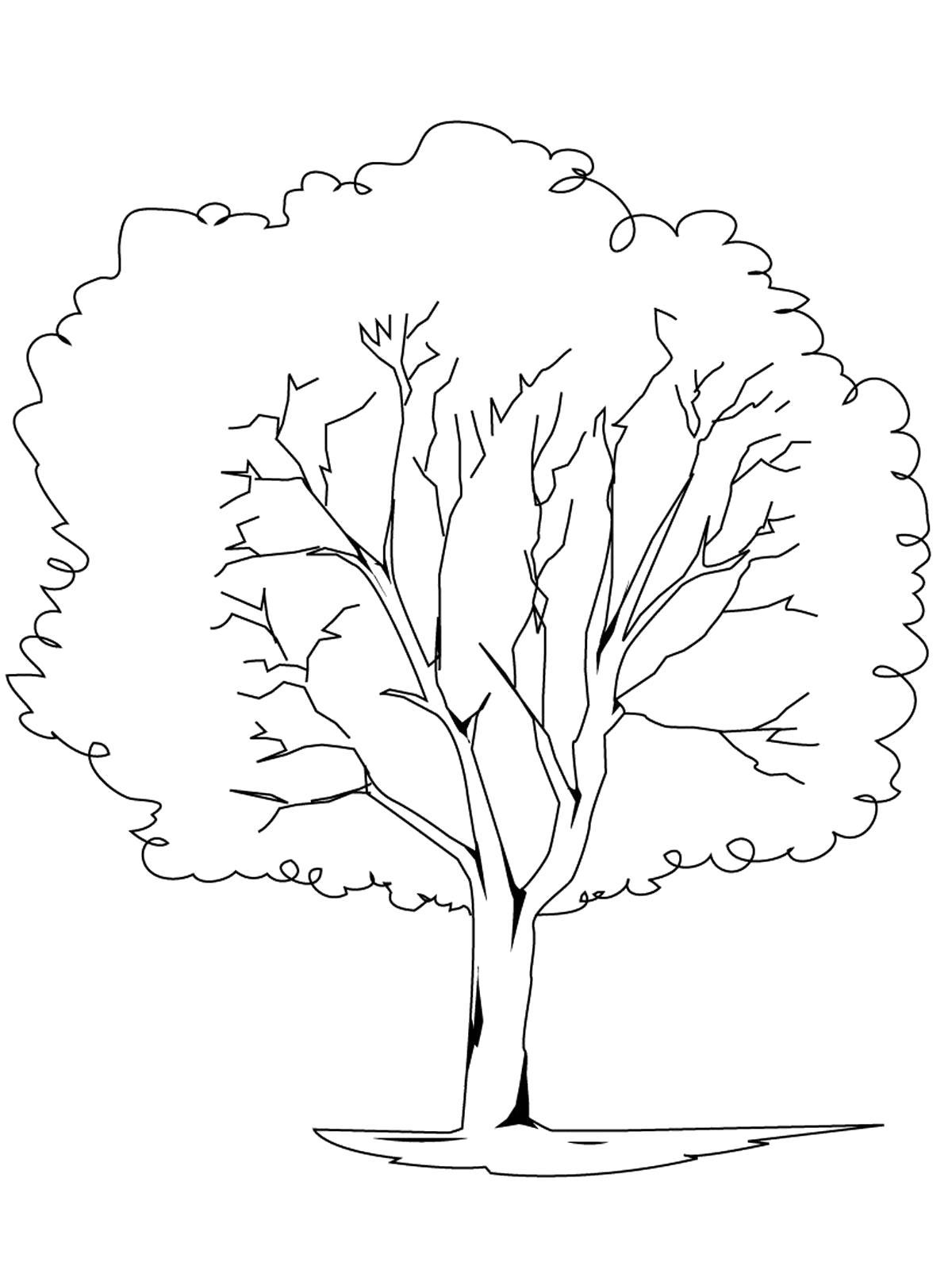 Раскраска  деревья и кустарники. . Скачать дерево.  Распечатать растения