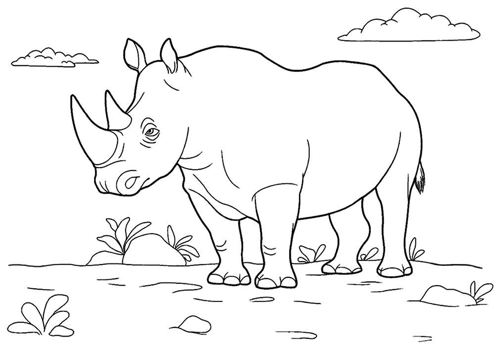 Раскраска  носорог для детей. Скачать Носорог.  Распечатать Дикие животные