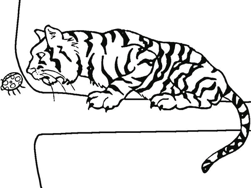 Раскраска Тигр и божья коровка. . Скачать .  Распечатать Дикие животные