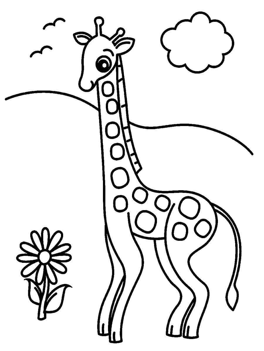 Раскраска Жираф и цветочек . Скачать жираф.  Распечатать Дикие животные