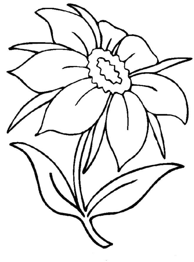 Раскраска Летний цветок. Скачать Цветы.  Распечатать Цветы
