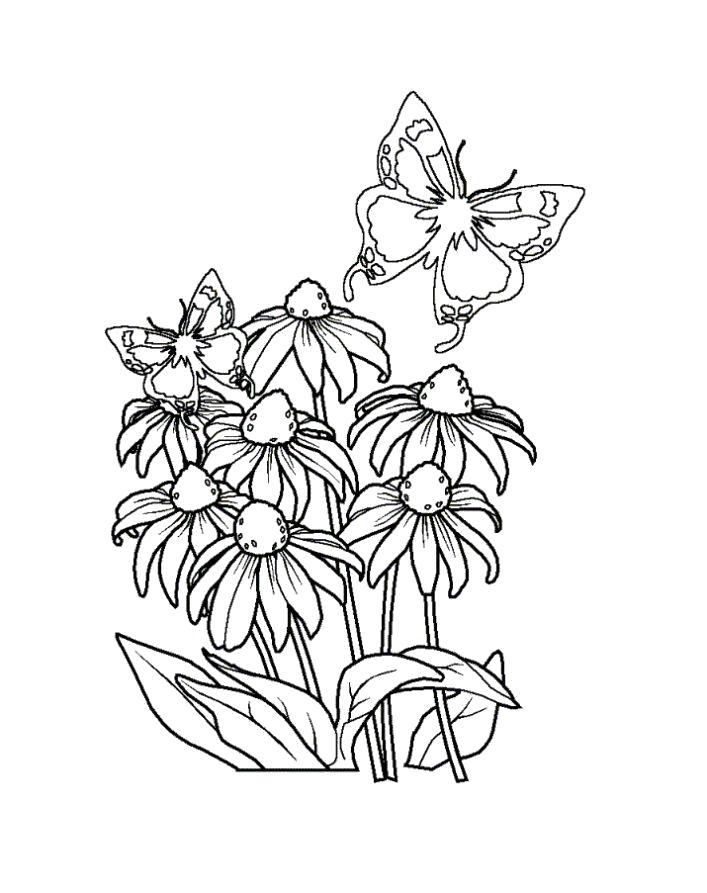 Раскраска Разукрашка бабочка в цвету. Скачать Бабочки.  Распечатать Бабочки