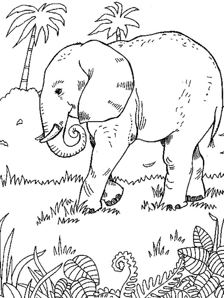 Раскраска Африканский  слон. Скачать .  Распечатать