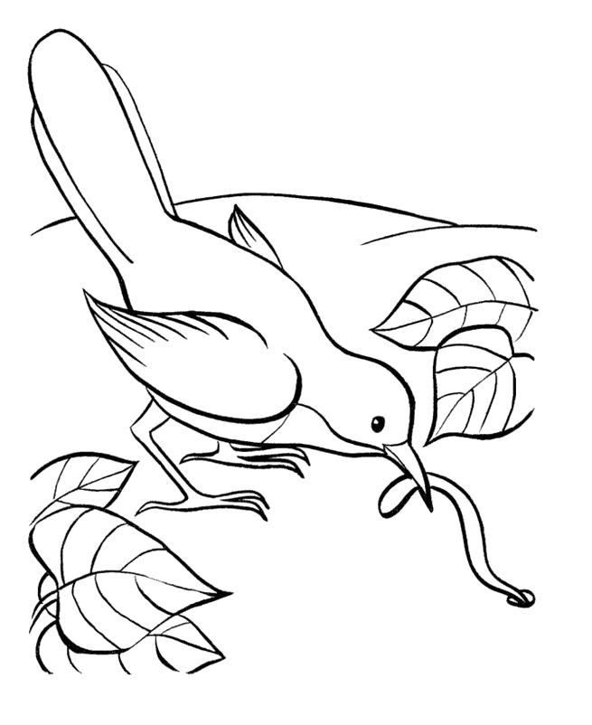 Раскраска  голубь поймал червека. Скачать Голубь.  Распечатать Голубь