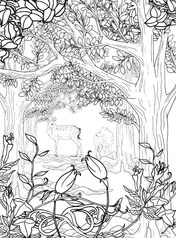 Раскраска Лесной Антистресс. Скачать .  Распечатать