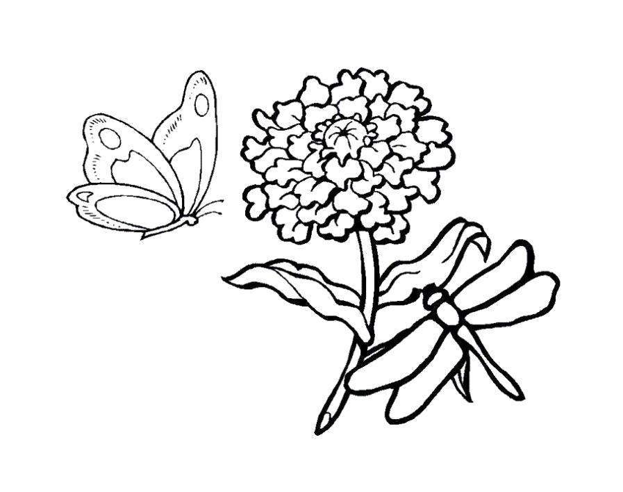 Раскраска бабочка и стрекоза. Скачать Бабочки.  Распечатать Бабочки