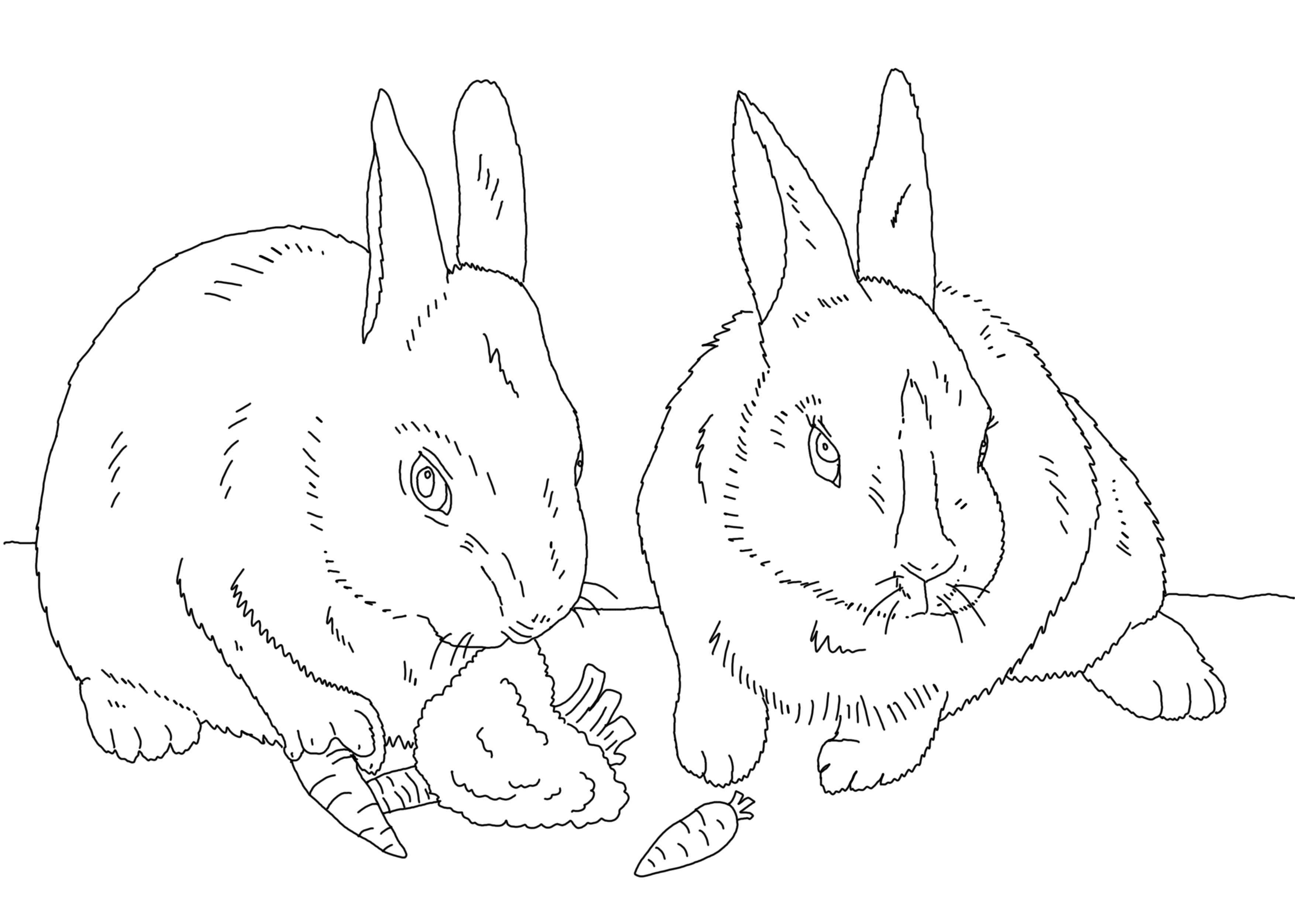 Раскраска Зайки с морковкой. Скачать животные.  Распечатать животные