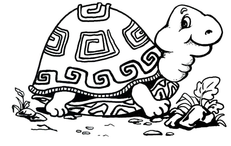 Раскраска  черепаха с красивым панцирем. Скачать Черепаха.  Распечатать Дикие животные