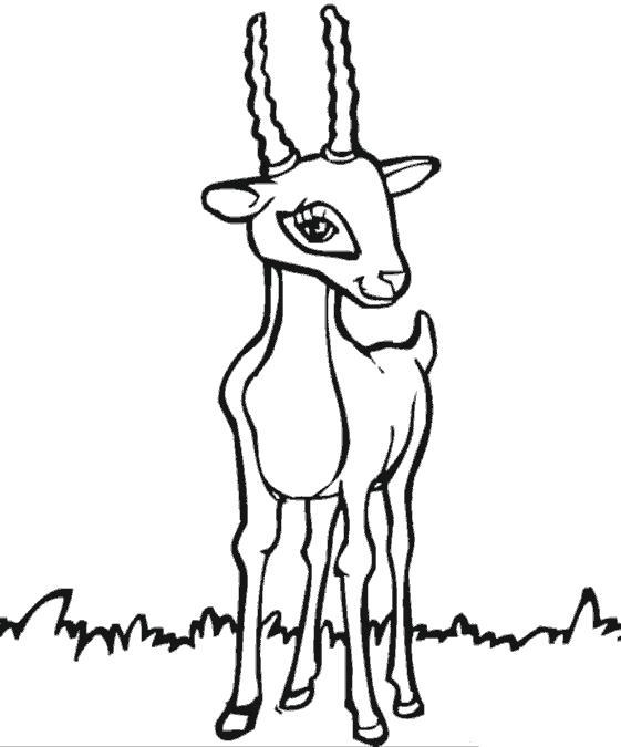 Раскраска Милая антилопа. Скачать Антилопа.  Распечатать Антилопа