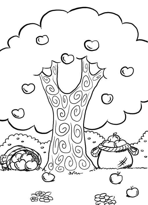 Раскраска Яблоня осенью. Скачать деревья.  Распечатать деревья