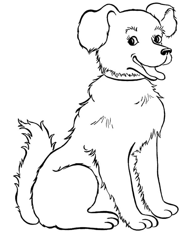 Раскраска  щенок с бантиком. Скачать Щенок.  Распечатать Домашние животные