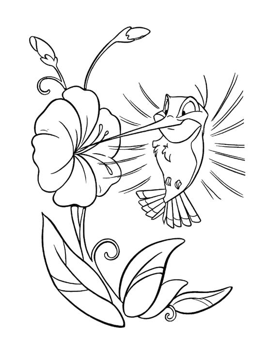 Раскраска Колибри пьет нектар. Скачать колибри.  Распечатать колибри