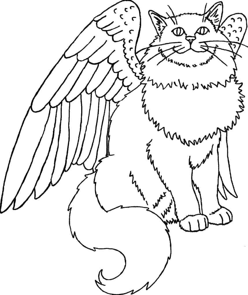 Раскраска кошка с крыльями. Скачать кот, кошка.  Распечатать Домашние животные
