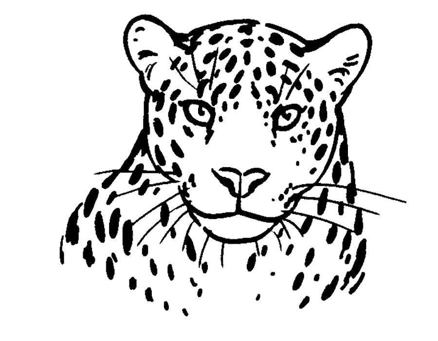 Раскраска Грациозный леопард. Скачать .  Распечатать