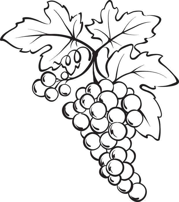 Раскраска виноград 3. Скачать виноград.  Распечатать ягоды