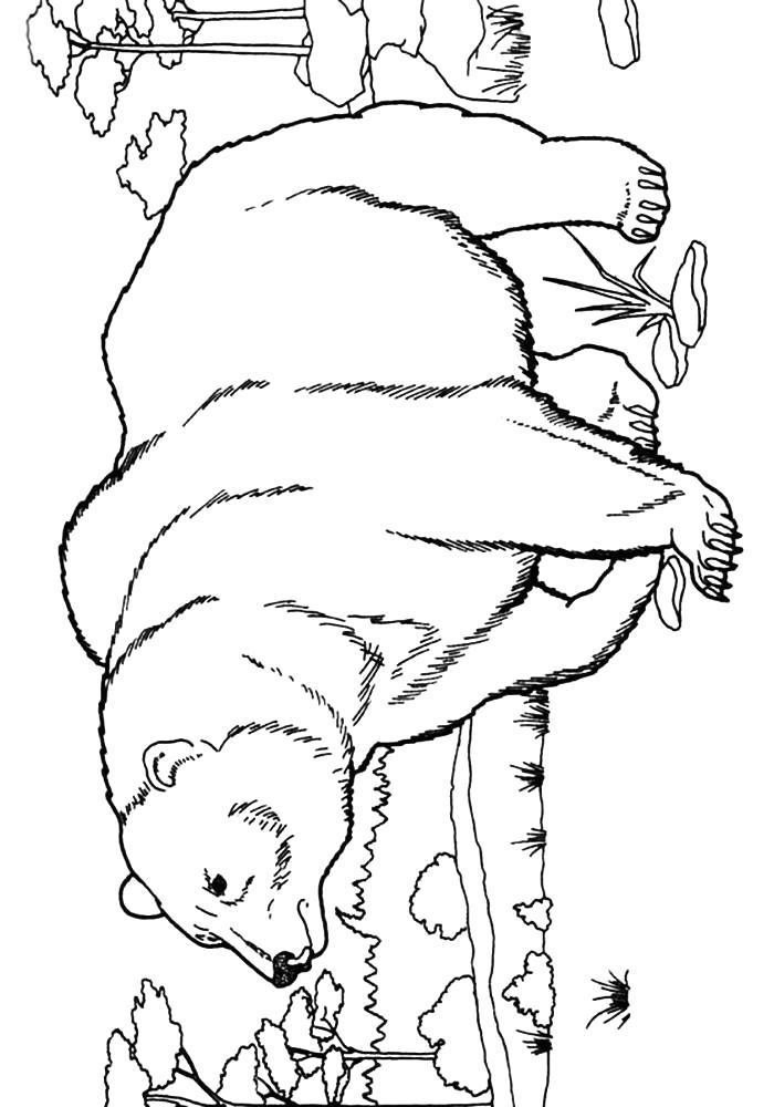 Раскраска медведь идет. Скачать медведь.  Распечатать медведь