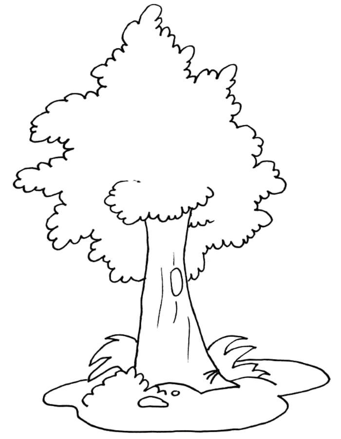 Раскраска  деревья и кустарники. распечатать деревья с листьями  и дуплом . Скачать дерево.  Распечатать растения
