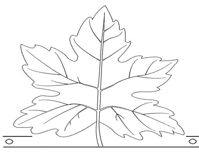 Раскраска Поделки. Осенние маски. Осенние поделки своими руками из картона. Осенний лист клена. Кленовый лист1 300x232 Детские аксессуары к  осеннему карнавальному костюму. Осенний лист из бумаги. Делаем вместе с детьми из бумаги своими руками осенний лист клена. Кленовый лист к детскому костюмированному утреннику.. Скачать лист.  Распечатать растения