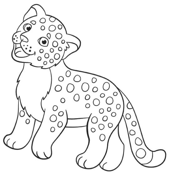 Раскраска Леопардик. Скачать животных.  Распечатать животных