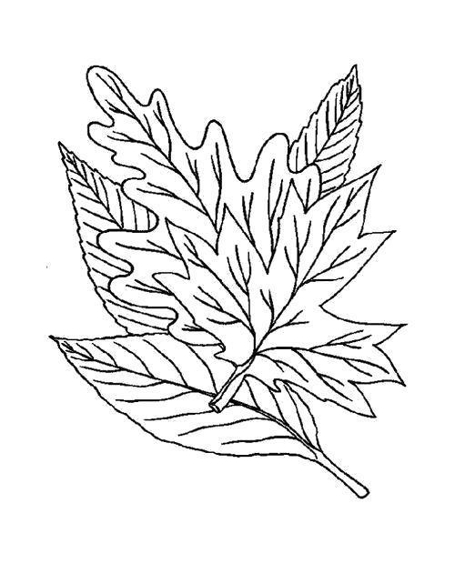 Раскраска  Стопка листьев. Скачать листья.  Распечатать листья
