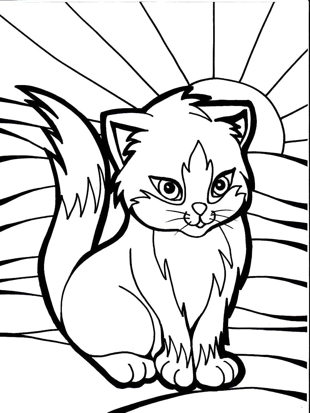 Раскраска  котята. Скачать Котенок.  Распечатать Домашние животные