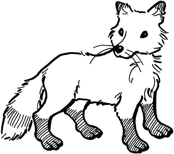 Раскраска лиса  для детей. Скачать лиса.  Распечатать Дикие животные