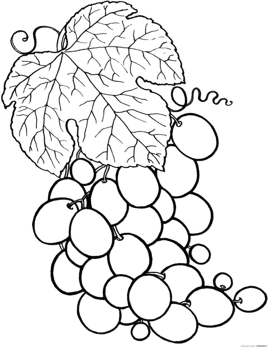 Раскраска виноградная гроздь с листиком. Скачать виноград.  Распечатать ягоды