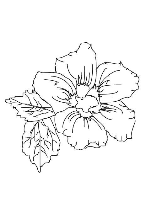 Раскраска  Листья и цветок. Скачать Цветы.  Распечатать Цветы