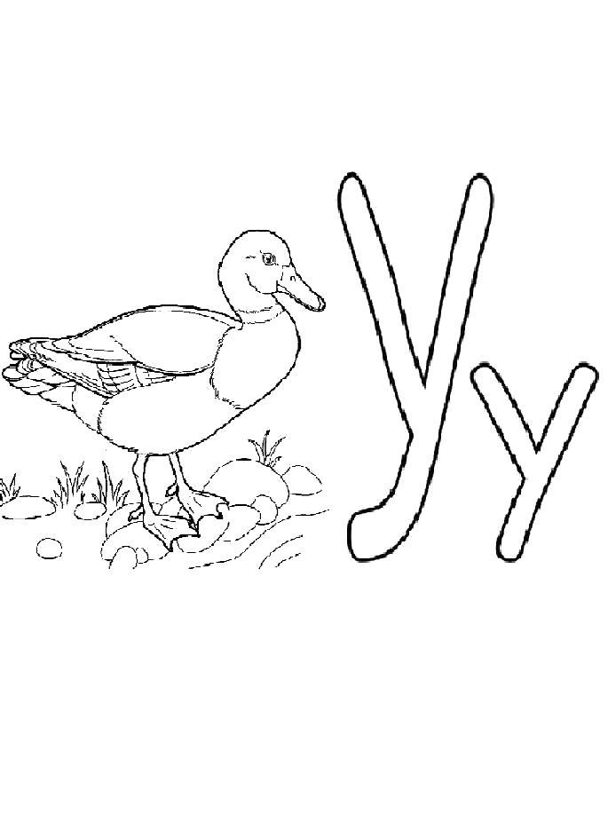 Раскраска  буква У с уткой. Скачать буквы.  Распечатать буквы