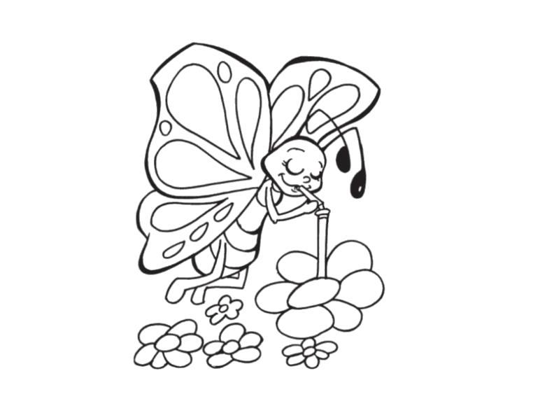 Раскраска Пьёт нектар. Скачать бабочка.  Распечатать бабочка