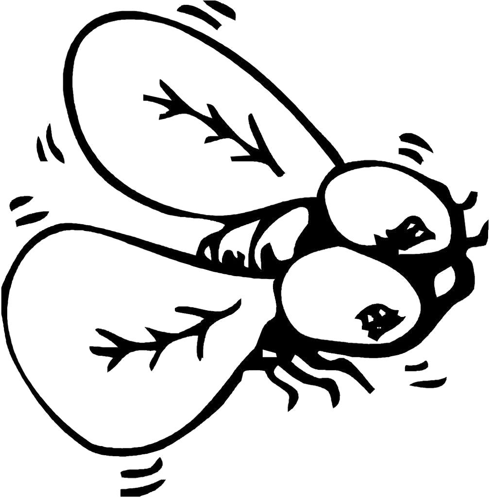 Раскраска  муха. Скачать муха.  Распечатать Насекомые