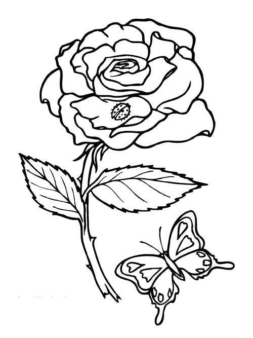 Раскраска  Божья коровка, цветок и бабочка. Скачать Цветок.  Распечатать Цветок