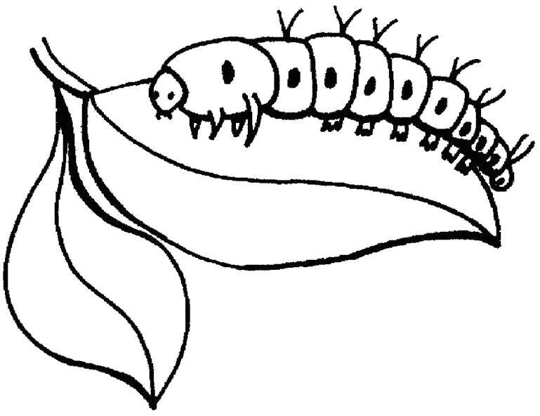 Раскраска гусеница  ест лист. Скачать Гусеница.  Распечатать Насекомые