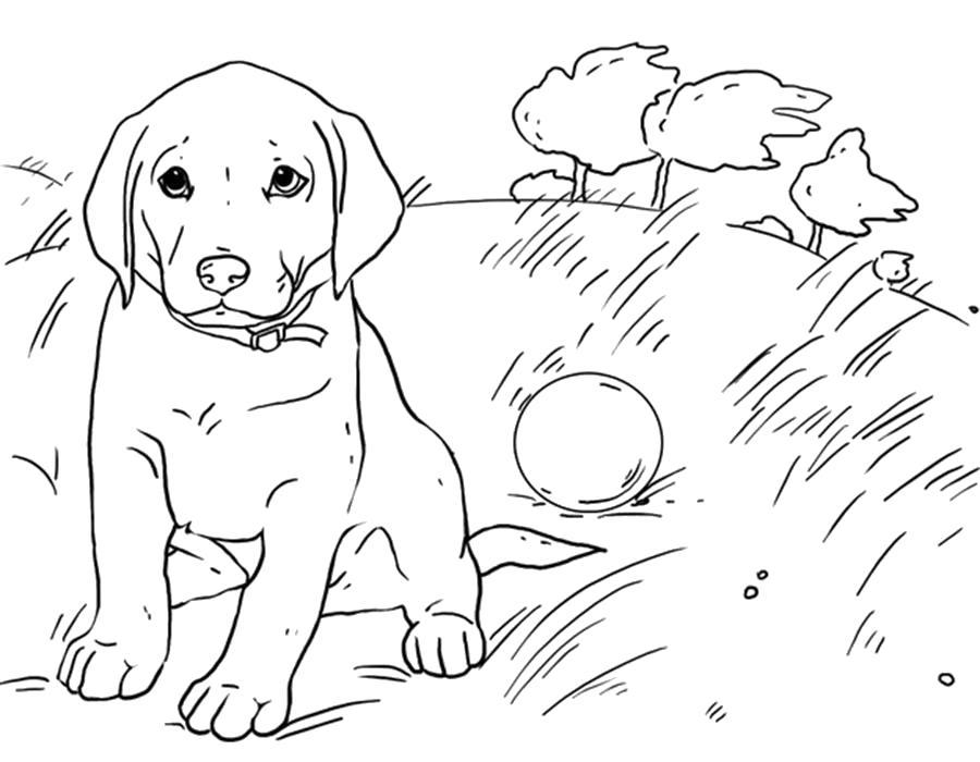 Раскраска  щенок играется с мячом. Скачать Щенок.  Распечатать Щенок