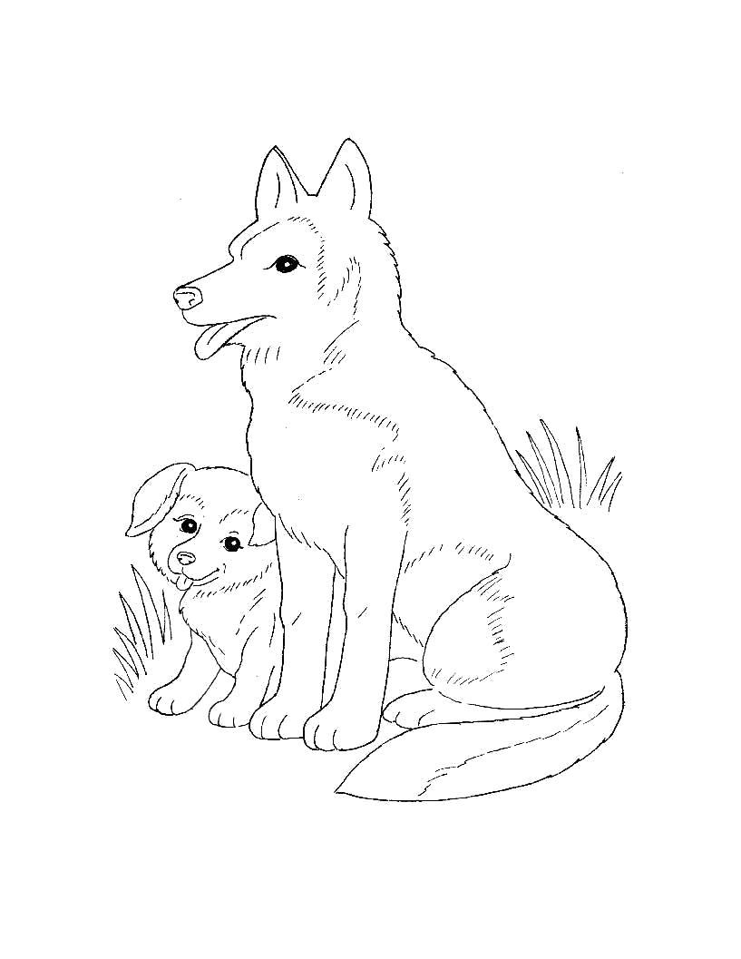 Раскраска  для самых маленьких  Домашние животные. Щенок с собакой хаски.. Скачать Щенок, Собака.  Распечатать Домашние животные