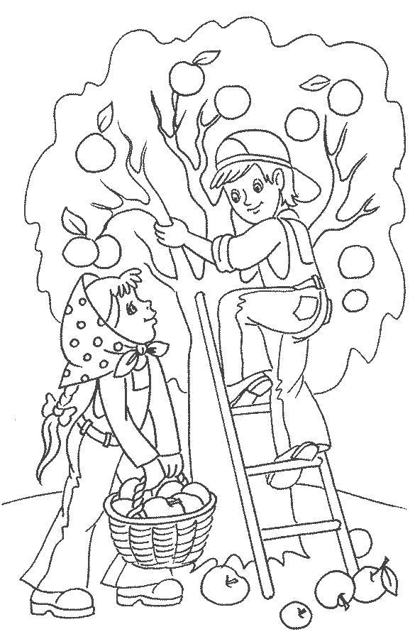 Раскраска сбор яблок осенью. Скачать Осень.  Распечатать Осень