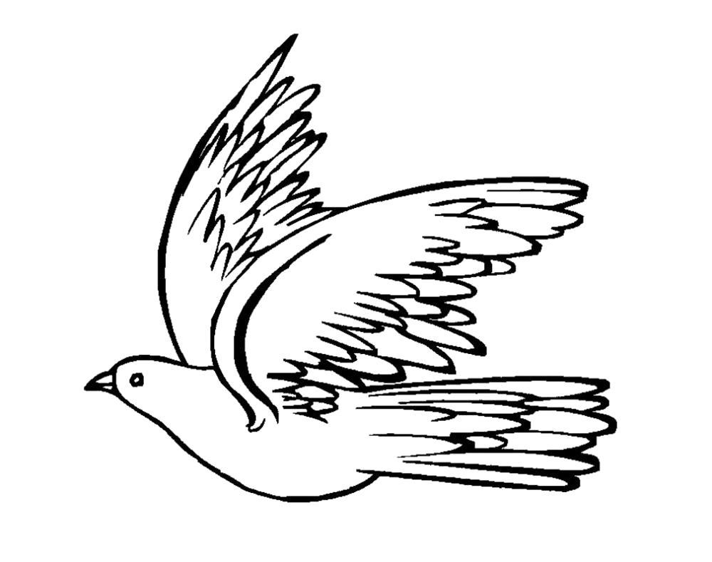 Раскраска  голубь машет крыльями. Скачать Голубь.  Распечатать Голубь
