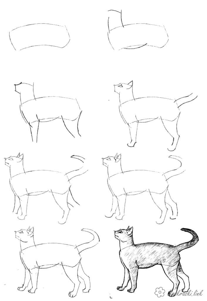 Раскраска  Как нарисовать как нарисовать кота. Скачать как нарисовать.  Распечатать Учимся рисовать