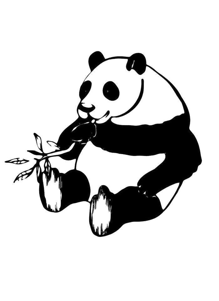 Раскраска  Панда жует ветку. Скачать Панда.  Распечатать Панда