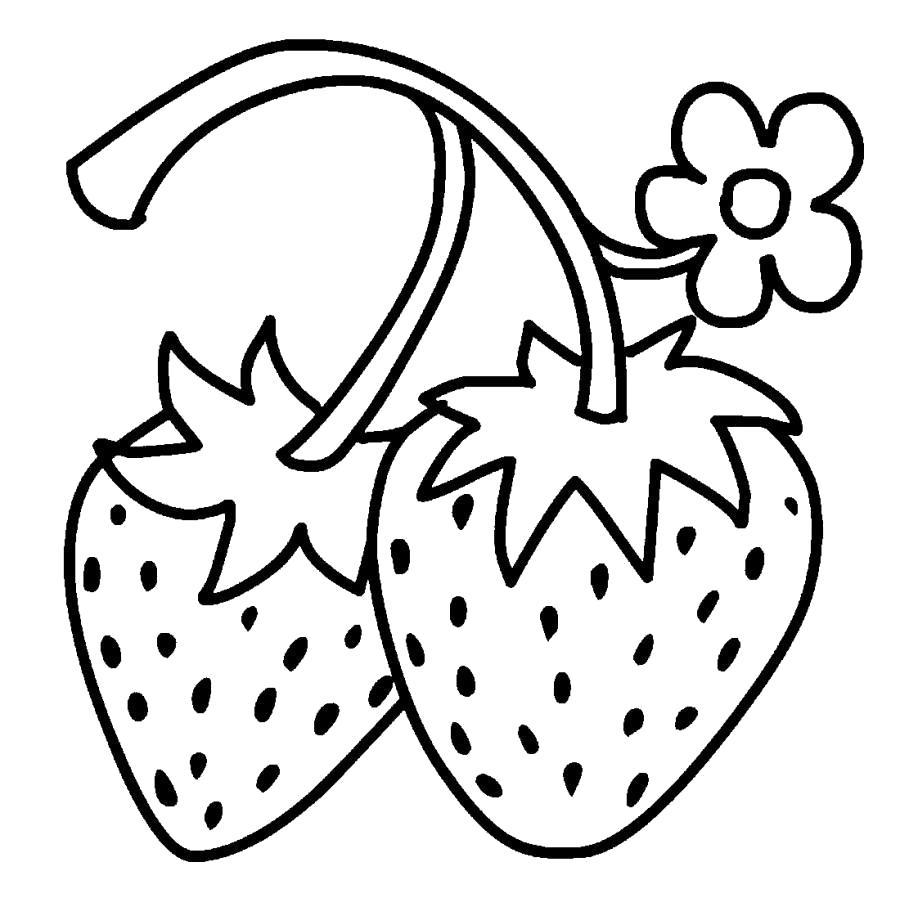 Раскраска Клубники на стебле и цветочек. Скачать .  Распечатать
