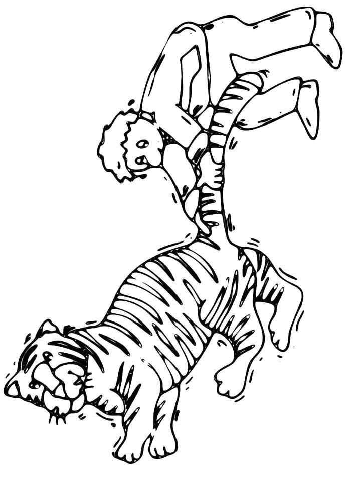 Раскраска  Человек держит тигра за хвост. Скачать Тигр.  Распечатать Тигр