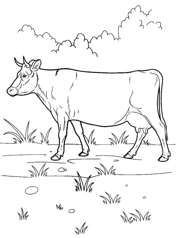 Раскраска  корова распечатать. Скачать Корова.  Распечатать Домашние животные