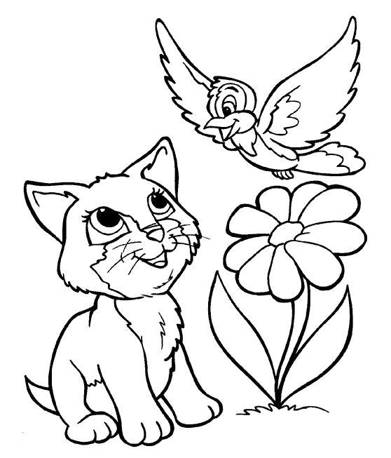 Раскраска Птичка и котёнок. Скачать .  Распечатать