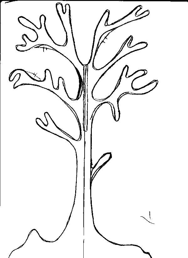 Раскраска  Деревья без листьев шаблон для аппликации дерево. Скачать дерево.  Распечатать растения