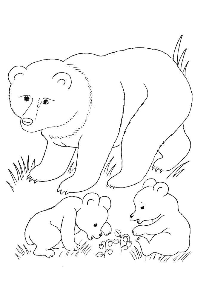 Раскраска Медведь и медвежата   звери. Скачать медведь.  Распечатать медведь