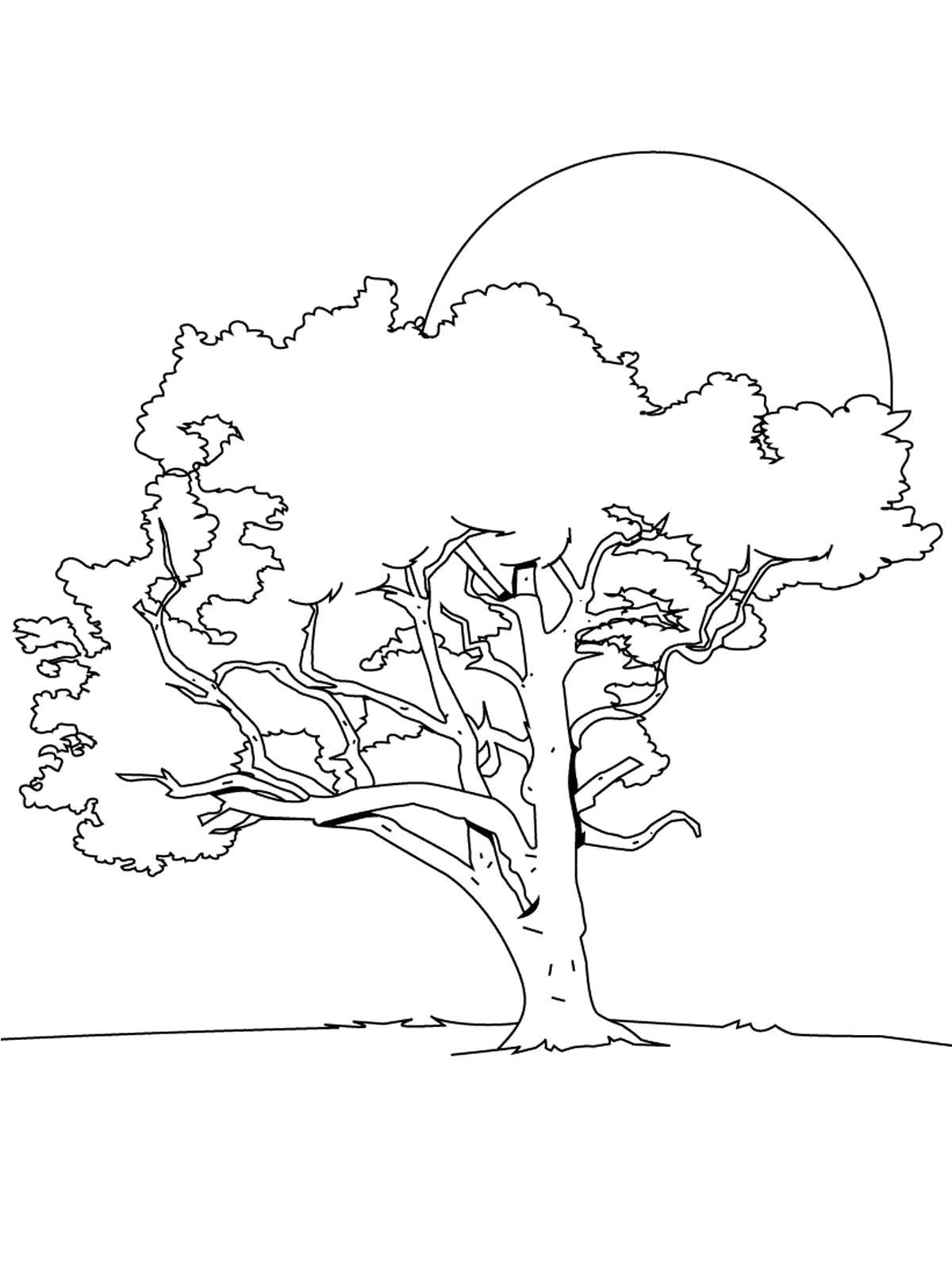 Раскраска  деревья и кустарники.. Скачать дерево.  Распечатать растения
