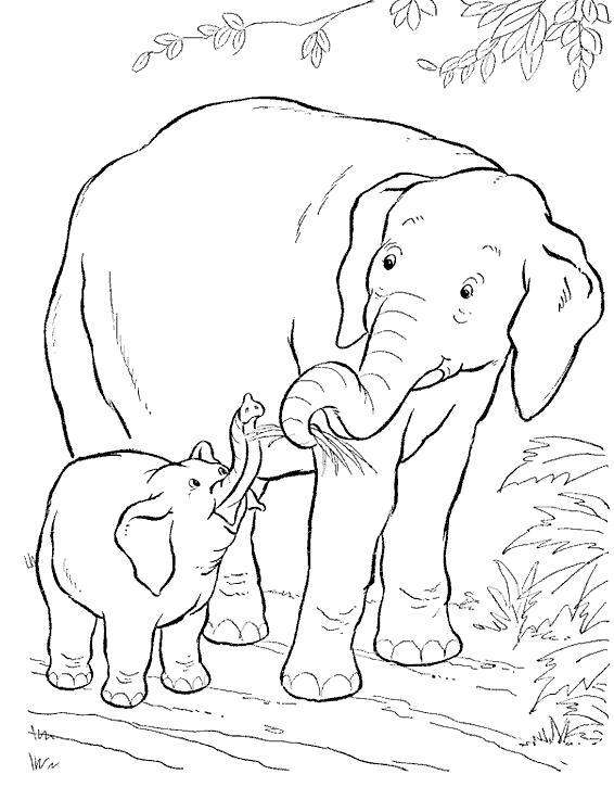 Раскраска семья слонят. Скачать слон.  Распечатать Дикие животные