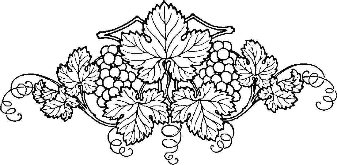 Раскраска Красивый виноградный кус. Скачать .  Распечатать