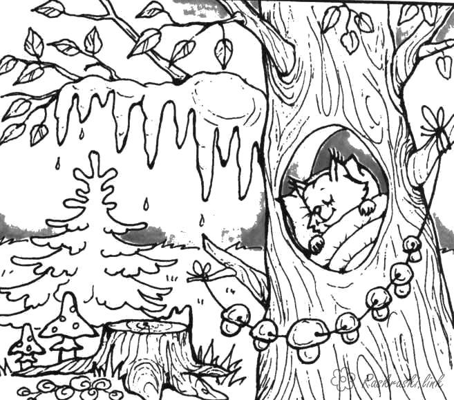 Раскраска  белка природа явления природы весна тепло пробуждение белка капель. Белка развесила грибы. Белка спит в дупле.. Скачать белка.  Распечатать Дикие животные